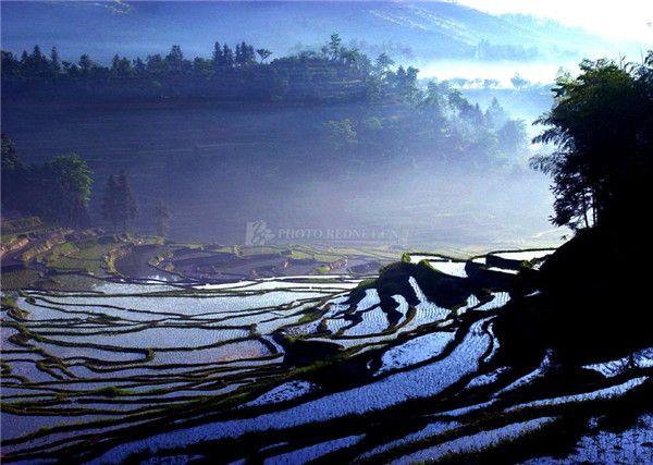 雾中的紫鹊界梯田