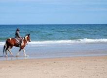 深圳骑马别有风情,海边的白马王子来啦!
