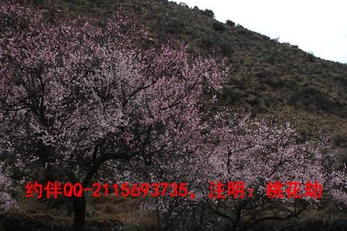 3月-桃花(2).jpg